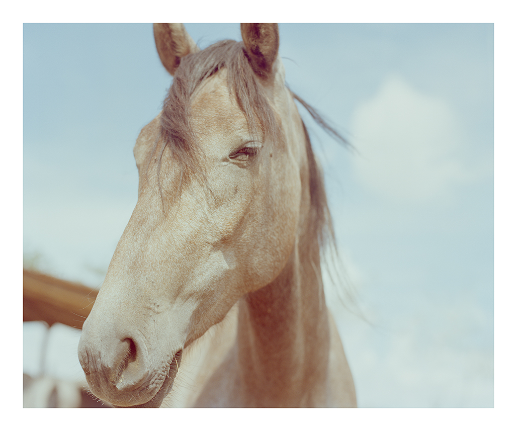 Emma Crichton. Horse