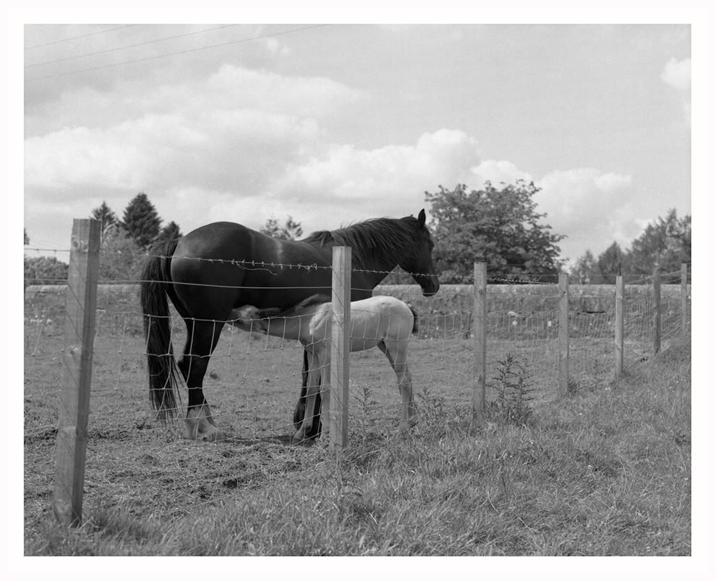 Emma Crichton. Foal Feeding